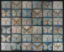 adam_fuss_butterfly_06