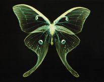 adam_fuss_butterfly_07