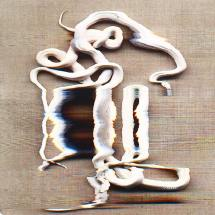adam_fuss_snake_04