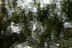 bushy_17-06-06_5_sec_451_low