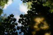 bushy_park_seq_1_5_sec17-06-10_104_low