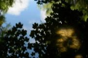 bushy_park_seq_1_5_sec17-06-10_106_low