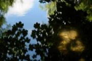 bushy_park_seq_1_5_sec17-06-10_107_low