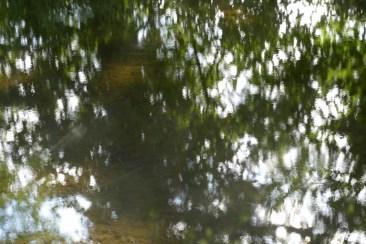 bushy_water_17-06-03_05_sec_seq_1_049_low