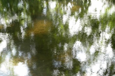 bushy_water_17-06-03_05_sec_seq_1_060_low