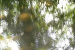 bushy_water_17-06-03_05_sec_seq_1_063_low