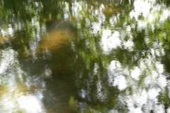 bushy_water_17-06-03_05_sec_seq_1_064_low