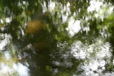 bushy_water_17-06-03_05_sec_seq_1_072_low