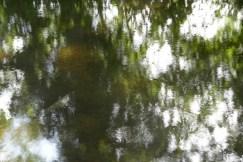 bushy_water_17-06-03_05_sec_seq_1_076_low
