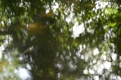 bushy_water_17-06-03_05_sec_seq_1_080_low