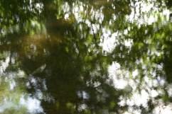 bushy_water_17-06-03_05_sec_seq_1_085_low
