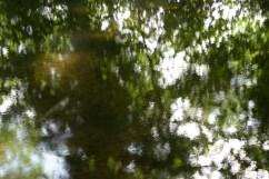 bushy_water_17-06-03_05_sec_seq_1_086_low