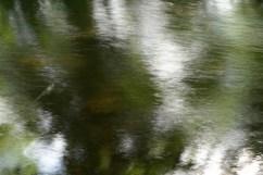 bushy_water_17-06-03_05_sec_seq_1_099_low