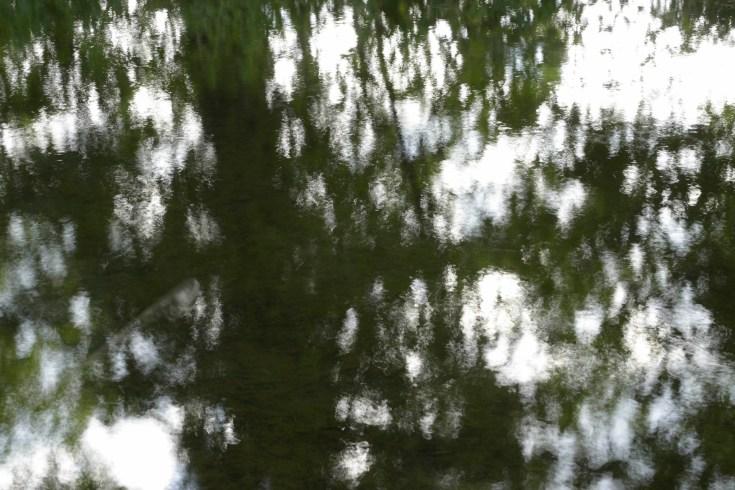 bushy_water_17-06-03_05_sec_seq_1_139_low