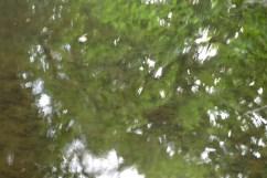 bushy_water_17-06-03_05_sec_seq_2_405_low