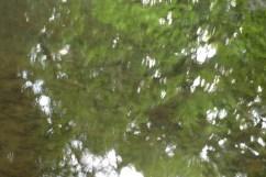 bushy_water_17-06-03_05_sec_seq_2_406_low