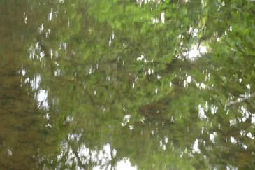 bushy_water_17-06-03_05_sec_seq_2_410_low