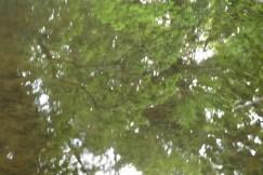 bushy_water_17-06-03_05_sec_seq_2_414_low