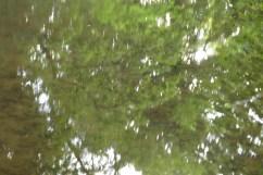 bushy_water_17-06-03_05_sec_seq_2_415_low