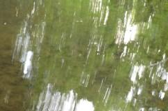 bushy_water_17-06-03_05_sec_seq_2_424_low