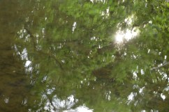 bushy_water_17-06-03_05_sec_seq_2_450_low