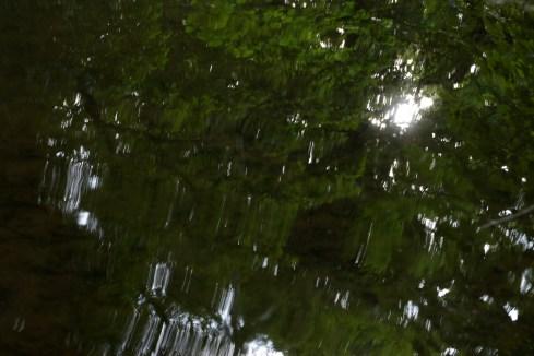 bushy_water_17-06-03_05_sec_seq_2_463_low
