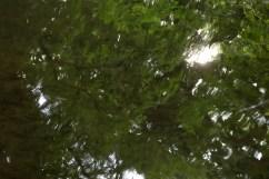 bushy_water_17-06-03_05_sec_seq_2_471_low