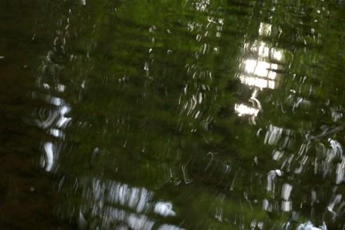 bushy_water_17-06-03_05_sec_seq_2_485_low