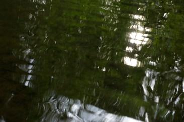 bushy_water_17-06-03_05_sec_seq_2_486_low