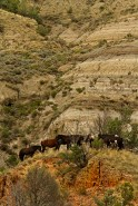 Proficiency 2013 Wild Horses S. Weber