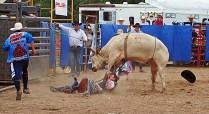 dpj bull-or-man Richard Yehl