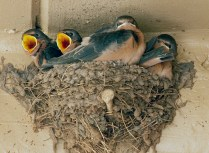 HM DC Hungry Birds Sandra Weber