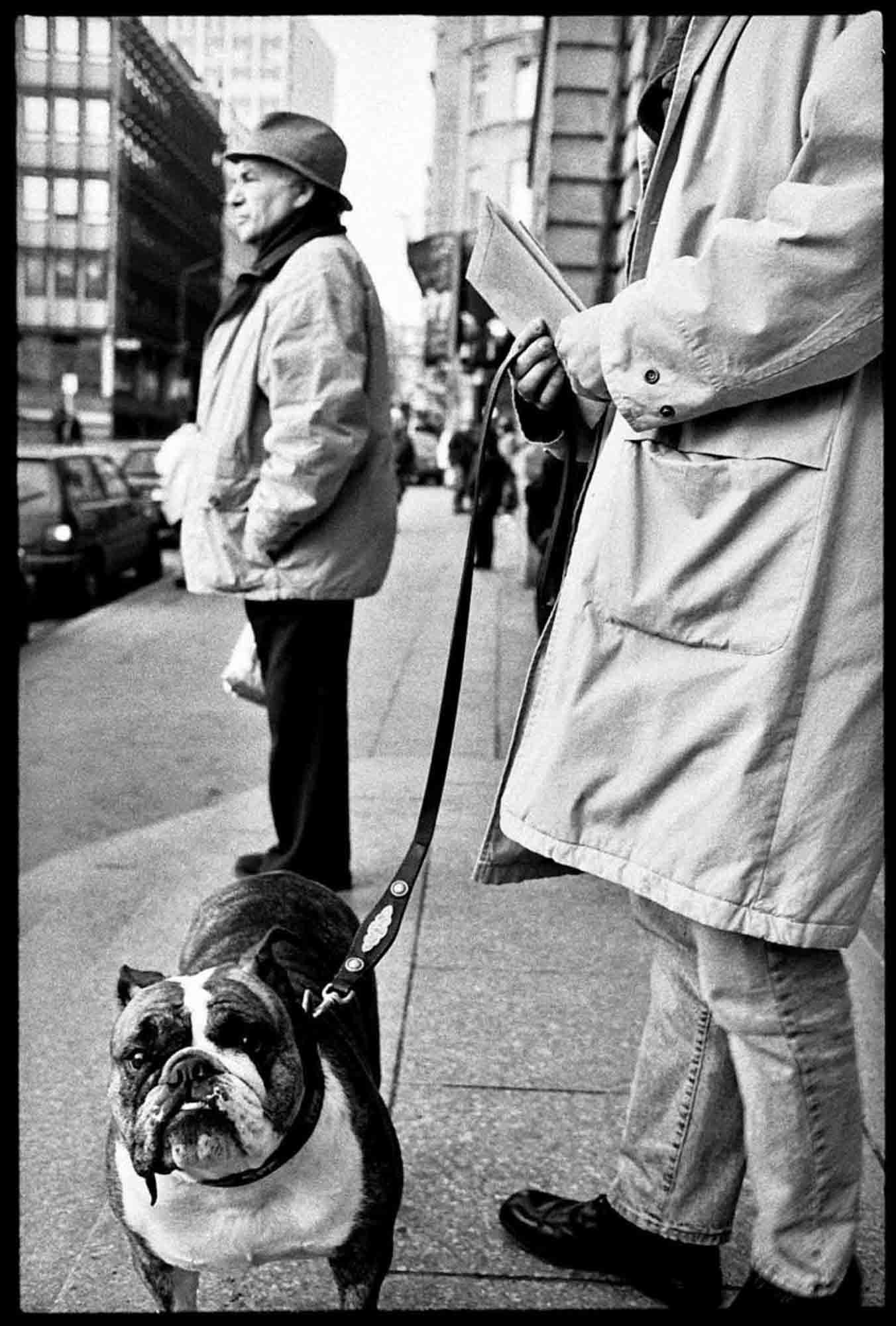 luxembourg-1996-chien-hamilius