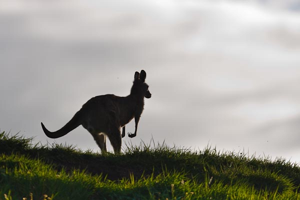 One of my first shots with a 400mm lens. I went for a silhouette style of image.