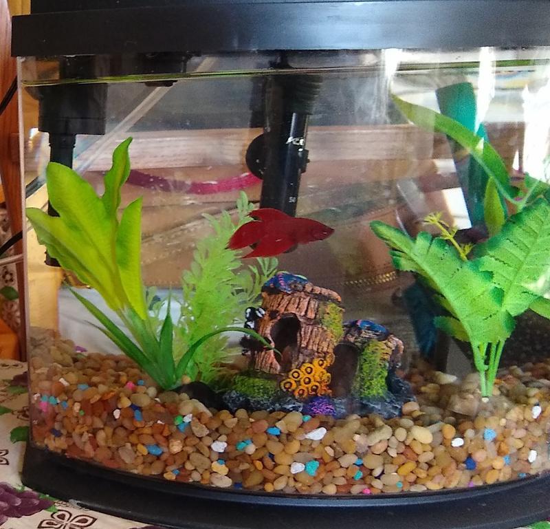aqueon 5 gallon minibow led desktop fish aquarium kit black