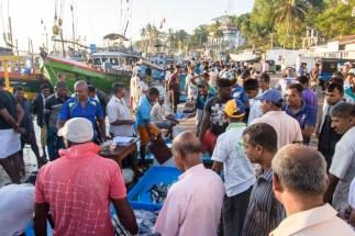 Fischmarkt in Tangalle