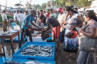 Auf dem Fischmarkt von Tangalle