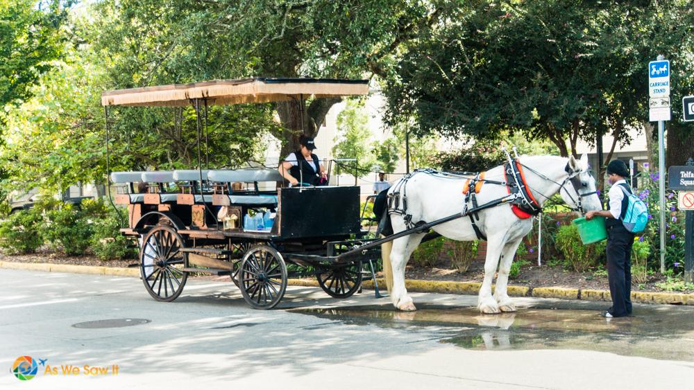 Horse-drawn tour carriage in Savannah