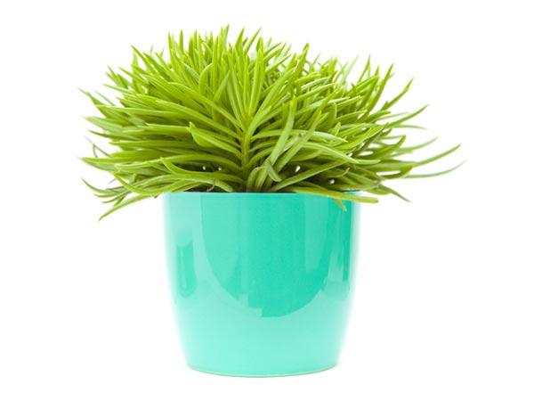 Tiny Indoor Plants