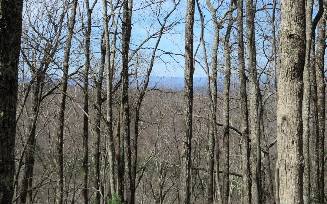 This 1.91 acre enchanting Mountain View Lot located in Enchanting Forest Subdivision, bordering US Forest Service, offers a great gentle knoll for building your mountain Cabin. The lot also offers pretty mountain views, beautiful hardwoods and is easy to access right off the road onto an old cut in Driveway. This is great mountain lot opportunity in the North GA Blue Ridge Mountains..