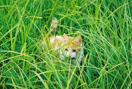 Lemongrass & Cats