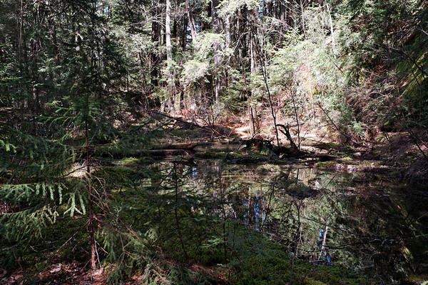 Reflection on still water