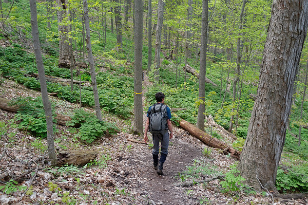 The trail in late spring is surprisingly pretty.  The various shades of green are so vibrant.