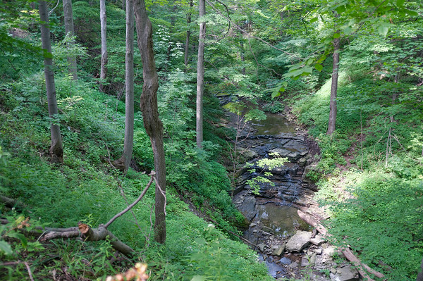 Looking down at a small stream or brook along the Bruce Trail