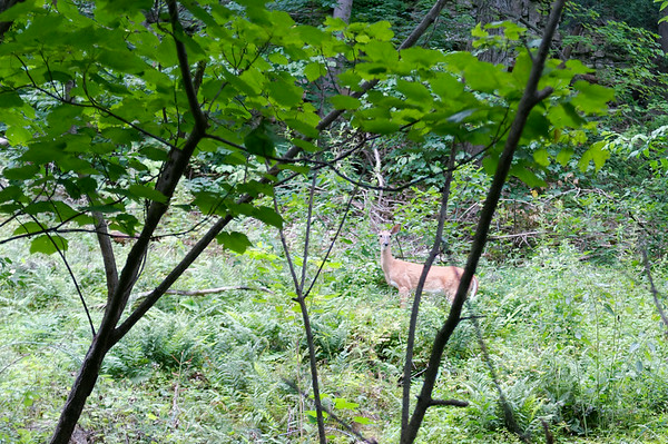 Deer!  This was the second one we encountered as we were hiking.