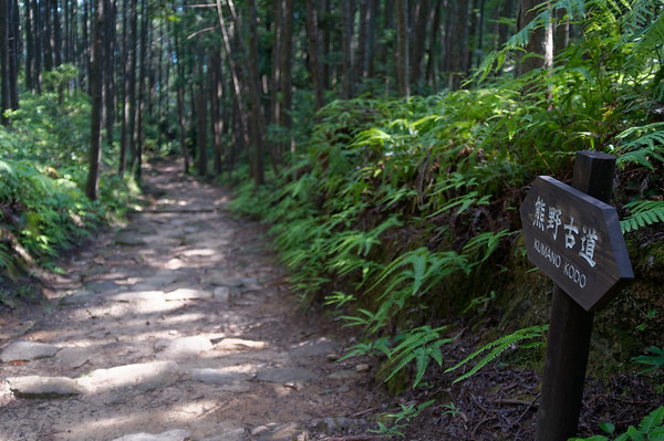 After a many lengthy ascents I was happy for a friendly descent and was surprised to find people hiking up from what I anticipated to be the Hongu Taisha area.
