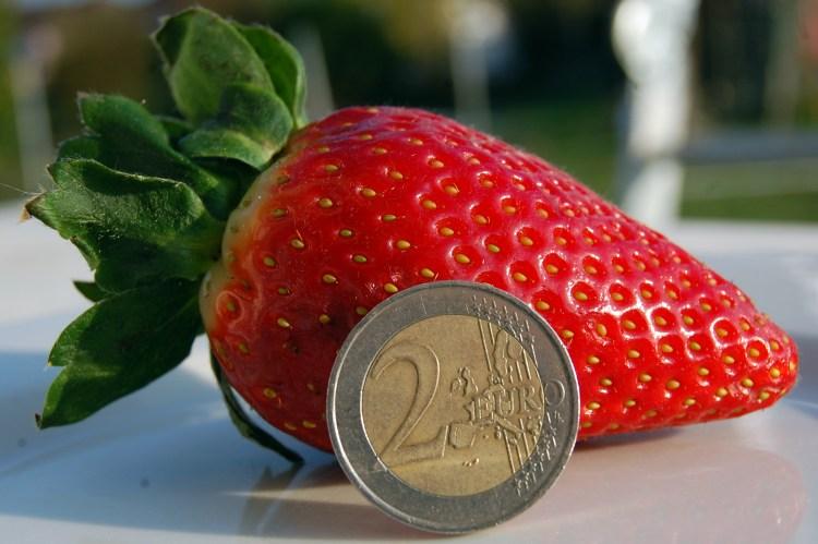 Une grosse fraise bien rouge !