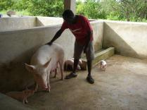 Fr Pierre- Benjamin responsable du centre et de l'atelier porcs