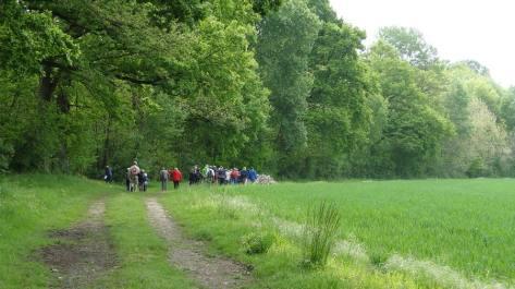 En marche à travers champs, bois... une cure de vert !...