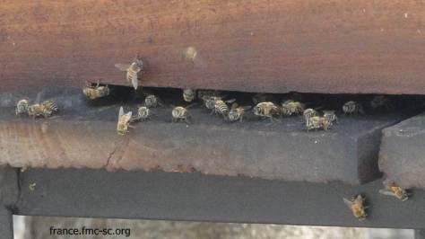 Les abeilles sont particulièrement piquantes là-bas